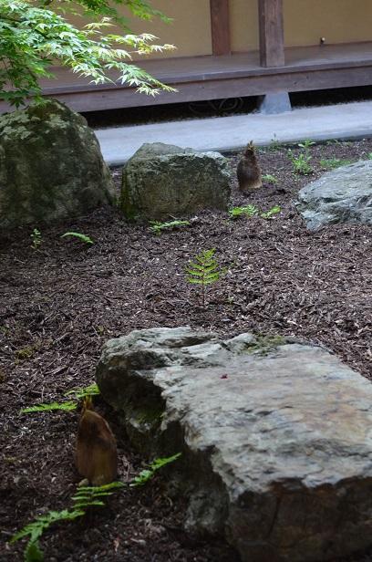 中庭からタケノコが!!_d0230676_932158.jpg
