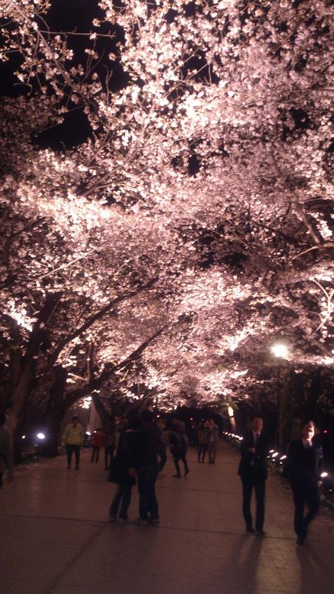 日本三大夜桜~高田公園のさくらロード~ちゃま初夜桜。_d0182179_1830279.jpg