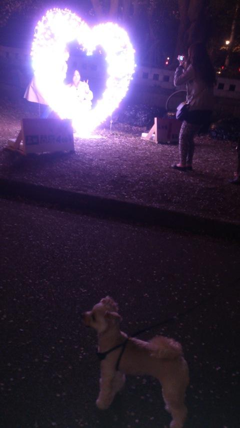 日本三大夜桜~高田公園のさくらロード~ちゃま初夜桜。_d0182179_18365613.jpg