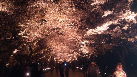 日本三大夜桜~高田公園のさくらロード~ちゃま初夜桜。_d0182179_18561619.jpg