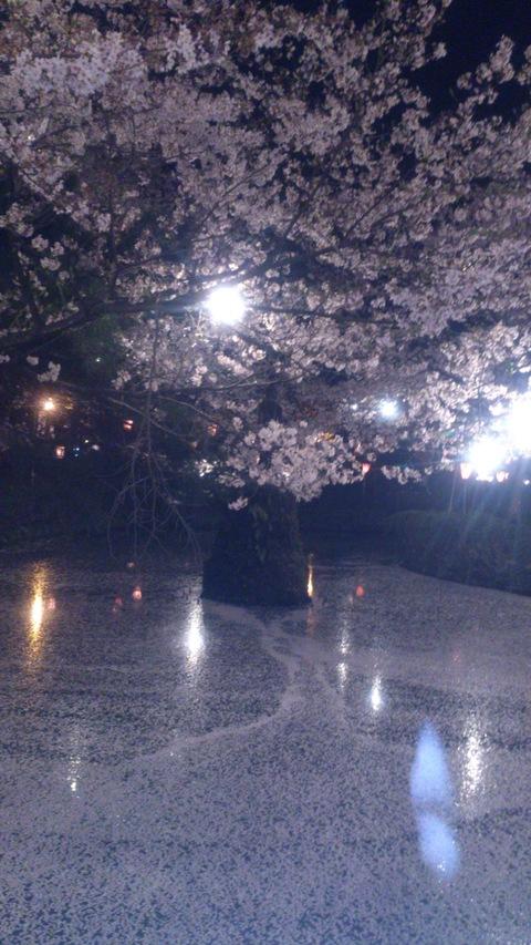 日本三大夜桜~高田公園のさくらロード~ちゃま初夜桜。_d0182179_190286.jpg