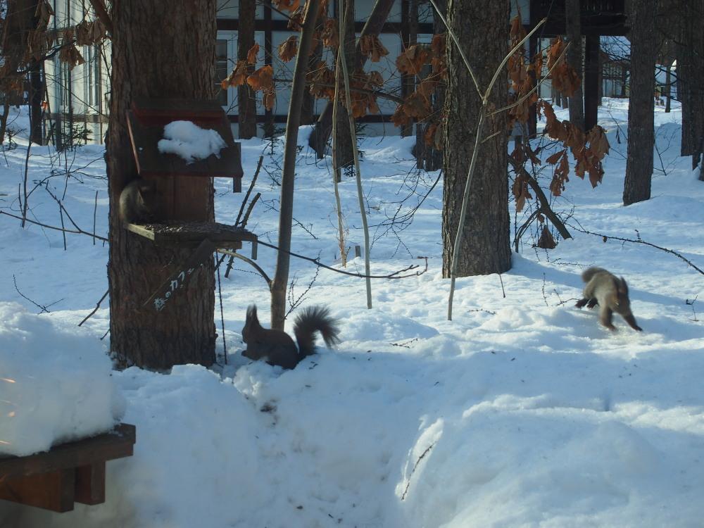 春の陽気にエゾリス君大集合。カメラに4匹・・収まりました!_f0276498_22102122.jpg