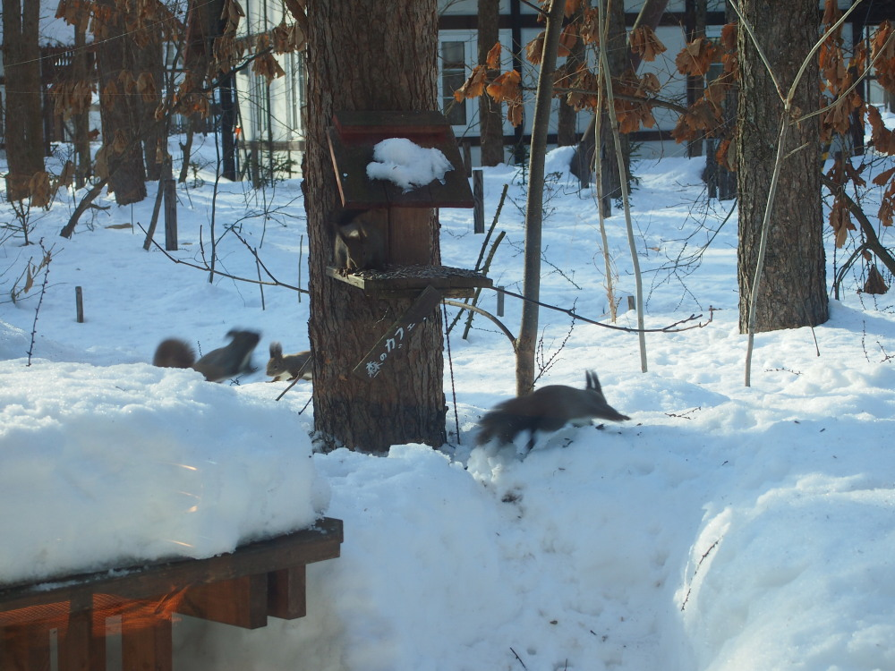 春の陽気にエゾリス君大集合。カメラに4匹・・収まりました!_f0276498_22115141.jpg