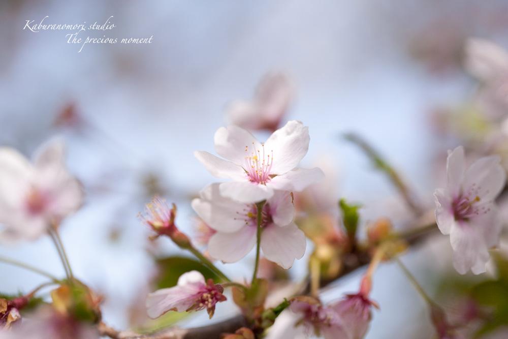 寒暖入り交じっての春_c0137403_1748843.jpg