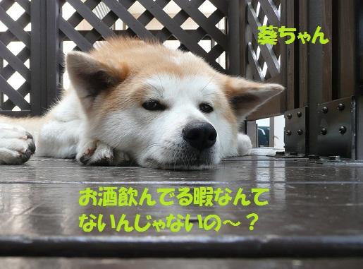 f0121712_1610451.jpg