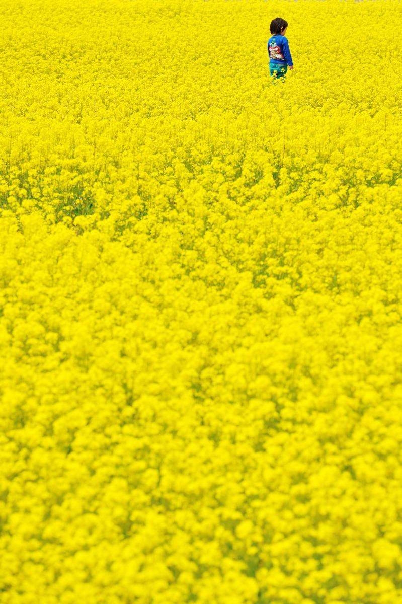 黄色の海_c0220824_20205937.jpg