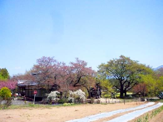 桜は早く終わっても_d0127634_1034575.jpg