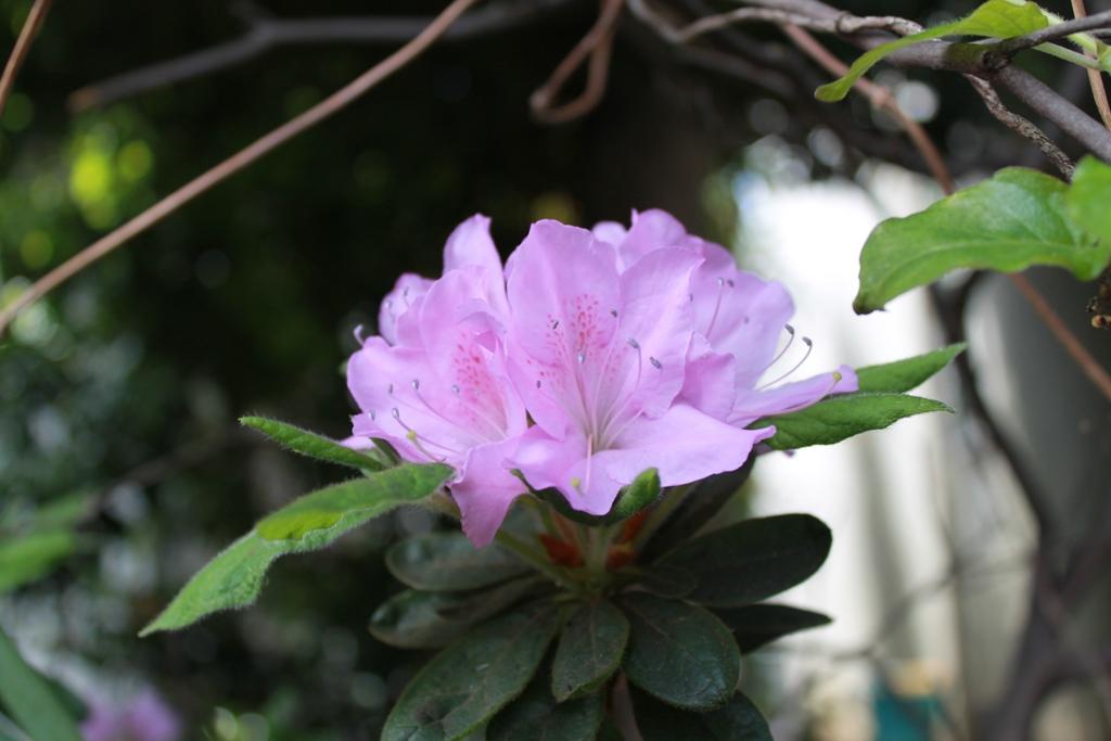 茶館の季節_f0070743_14445688.jpg