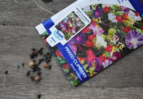 種など蒔くとしよう_d0101846_7234969.jpg