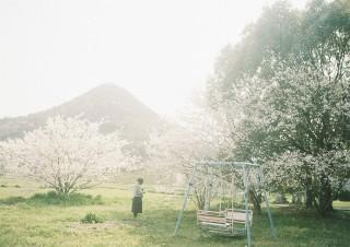 今年の桜のこと_b0178548_11364469.jpg