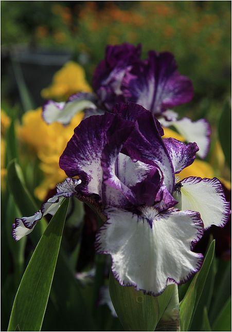 庭の花_a0256349_14255396.jpg