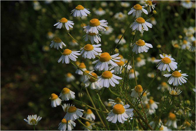 庭の花_a0256349_14293670.jpg