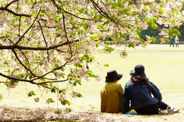 八重桜の季節_a0257652_22255829.jpg