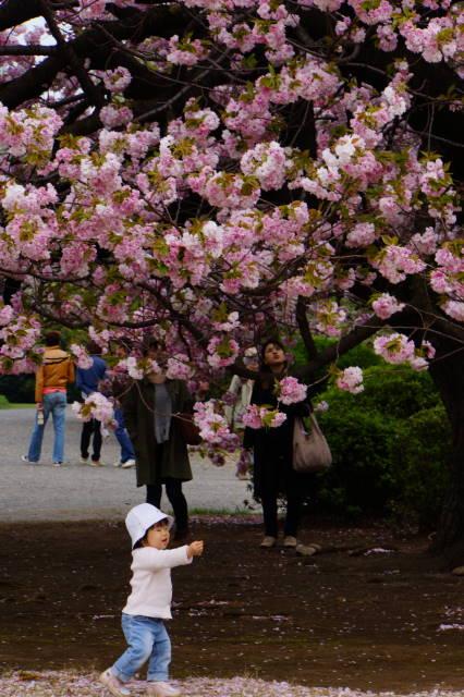 八重桜の季節_a0257652_22262317.jpg