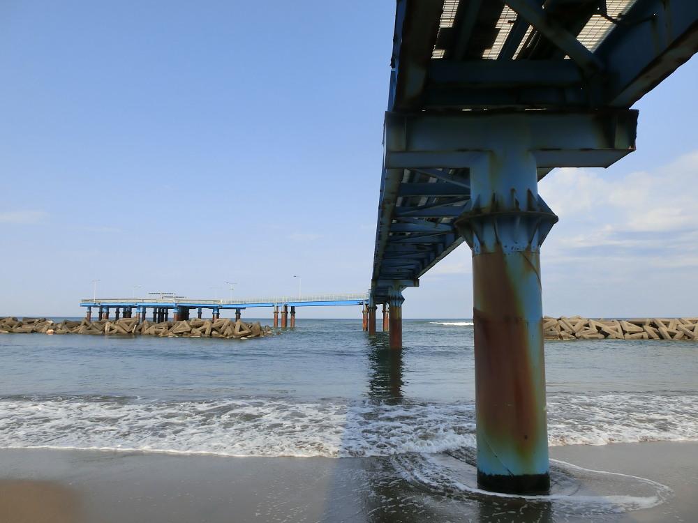 セグロセキレイ  海辺も心地よい。  2013.4.14新潟県_a0146869_2162236.jpg