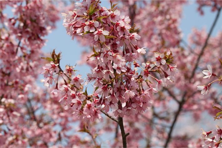 お花見してきました。_a0093189_033367.jpg