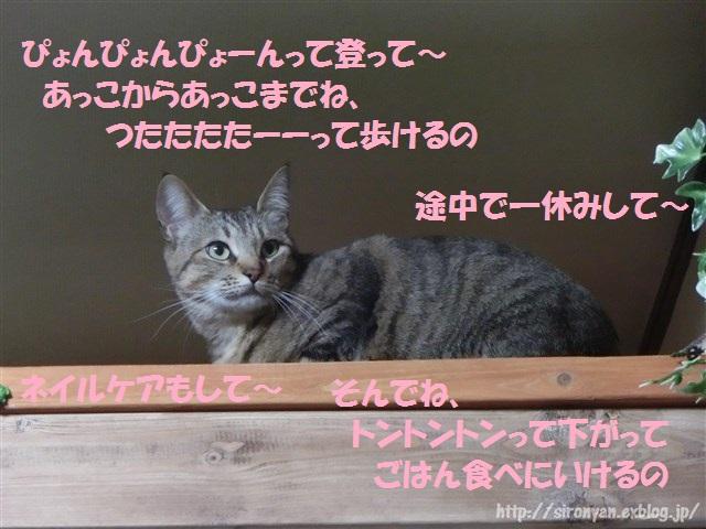 a0159490_1647142.jpg