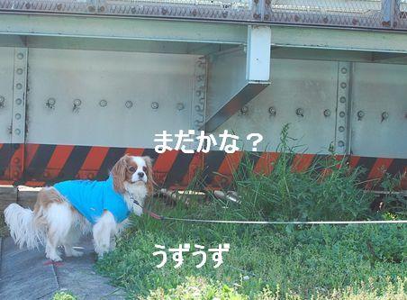 f0214121_1635419.jpg