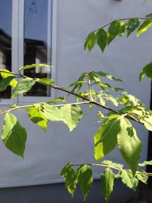 春の暖かさ。_b0253627_23393157.jpg