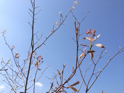 春の暖かさ。_b0253627_23393547.jpg
