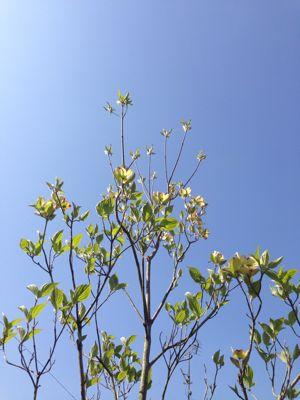 春の暖かさ。_b0253627_23394421.jpg
