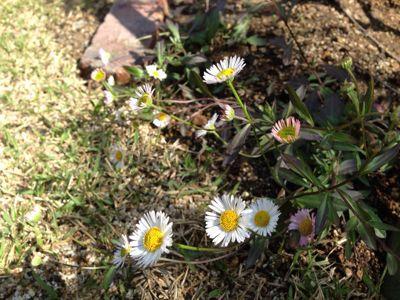 春の暖かさ。_b0253627_23415370.jpg