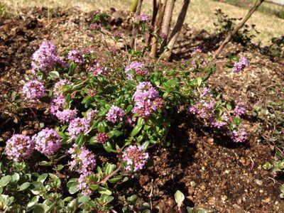 春の暖かさ。_b0253627_2342029.jpg