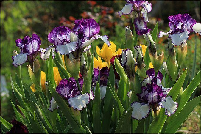 庭の花_a0256349_14282190.jpg