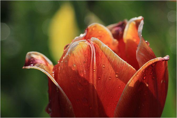 庭の花_a0256349_14464834.jpg