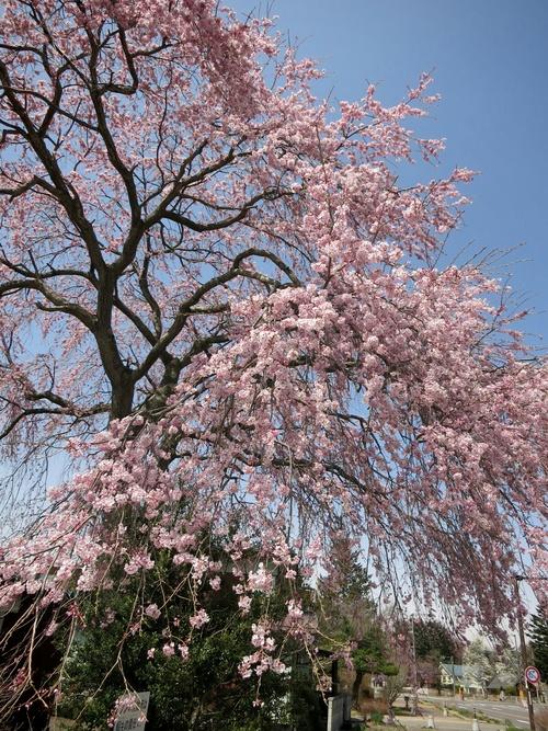 軽井沢に春の訪れ♪_f0236260_21285517.jpg