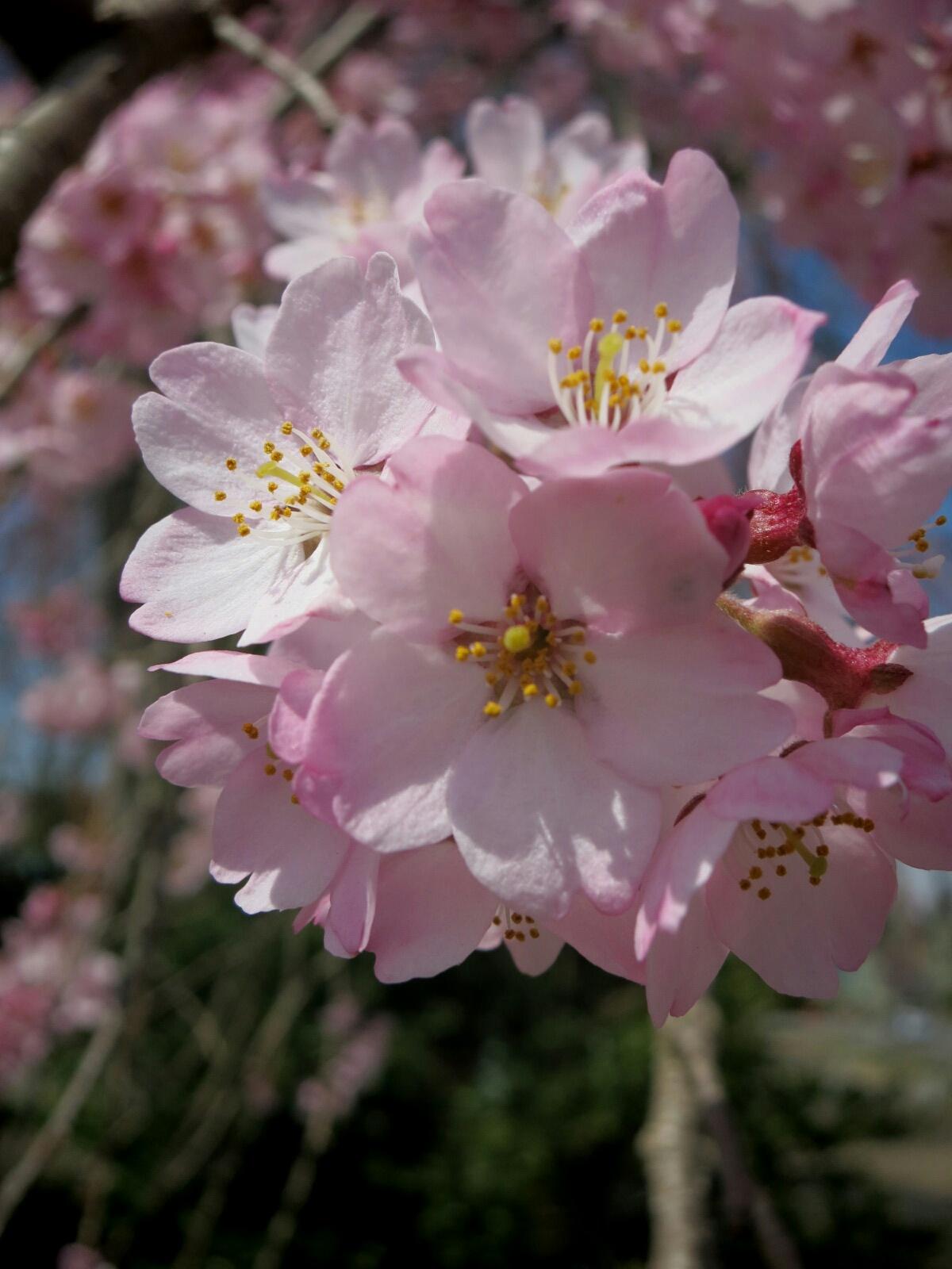 軽井沢に春の訪れ♪_f0236260_21294019.jpg