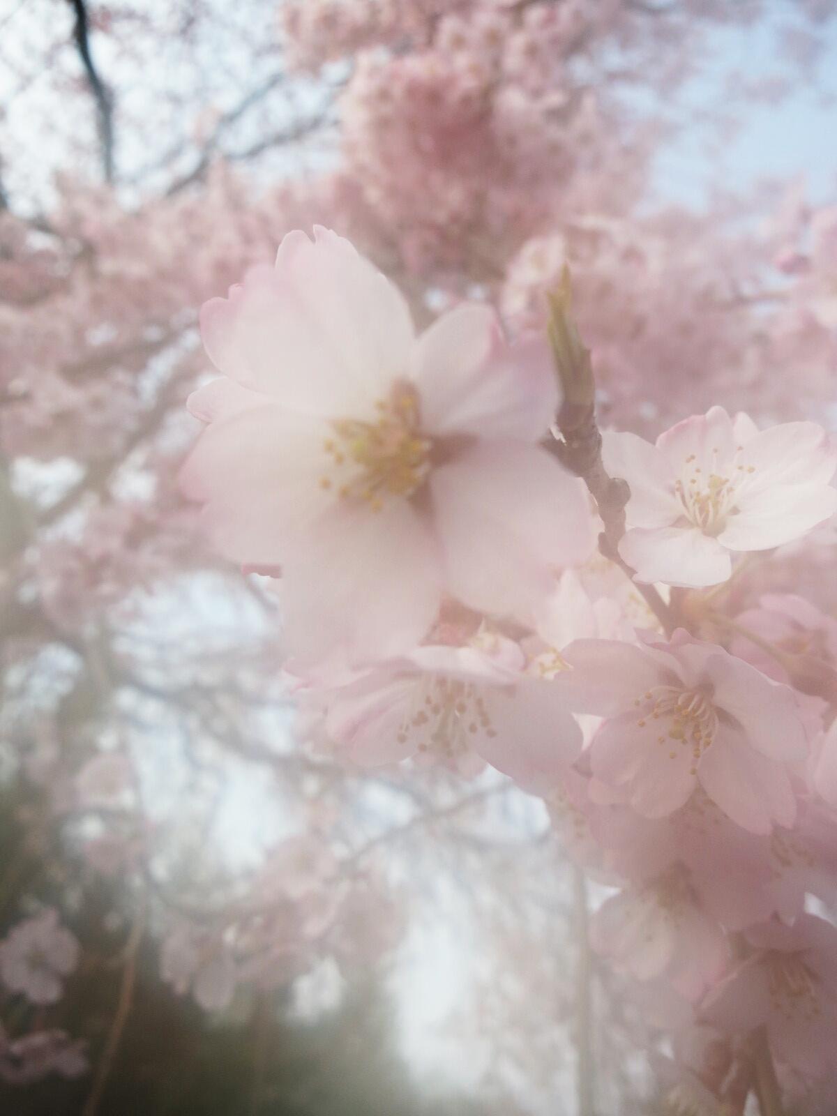 軽井沢に春の訪れ♪_f0236260_21315032.jpg