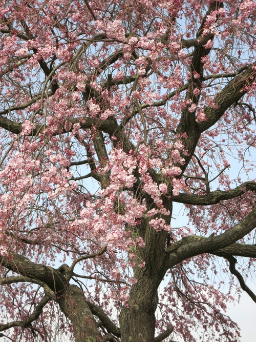 軽井沢に春の訪れ♪_f0236260_21583362.jpg