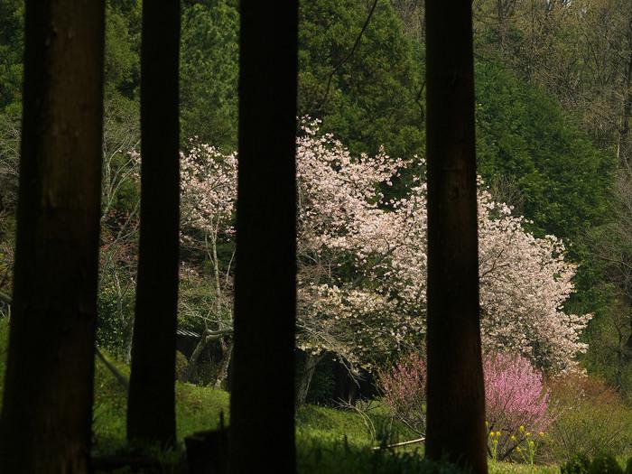 桜 2013 <奈良 鏡女王墓> オフ会  _f0021869_20325474.jpg