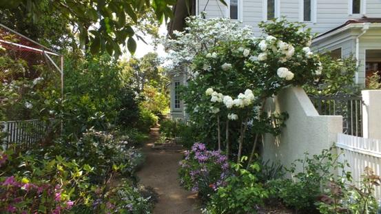 午後の庭_b0214473_1531350.jpg