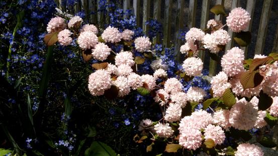 午後の庭_b0214473_1563756.jpg