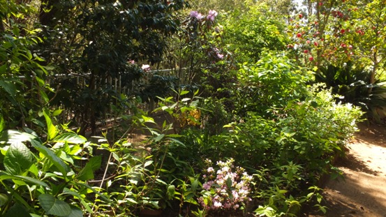 午後の庭_b0214473_1592632.jpg