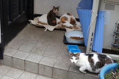 招かざれる猫_c0193077_11444262.jpg