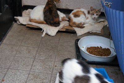 招かざれる猫_c0193077_11462664.jpg