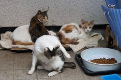 招かざれる猫_c0193077_114646.jpg