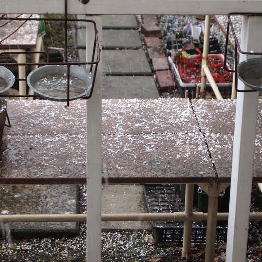 雹が降って大慌て_a0292194_20411631.jpg