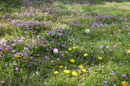 菜園は春の盛り1_e0048413_22533363.jpg