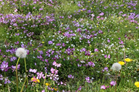 菜園は春の盛り1_e0048413_22534981.jpg