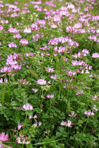 菜園は春の盛り1_e0048413_22541957.jpg