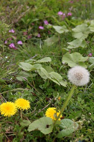 菜園は春の盛り1_e0048413_2254253.jpg