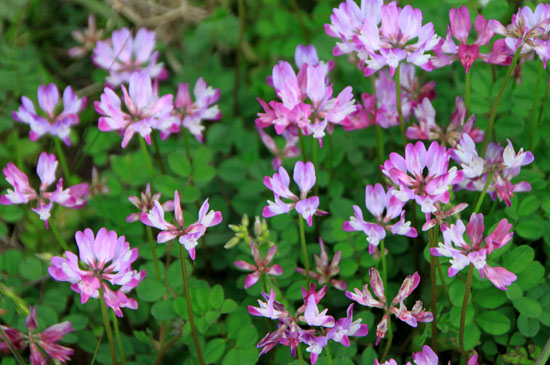 菜園は春の盛り1_e0048413_22543292.jpg
