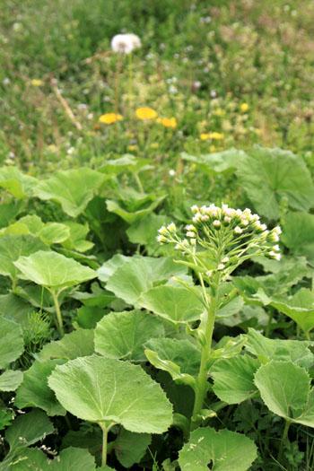 菜園は春の盛り1_e0048413_22544216.jpg