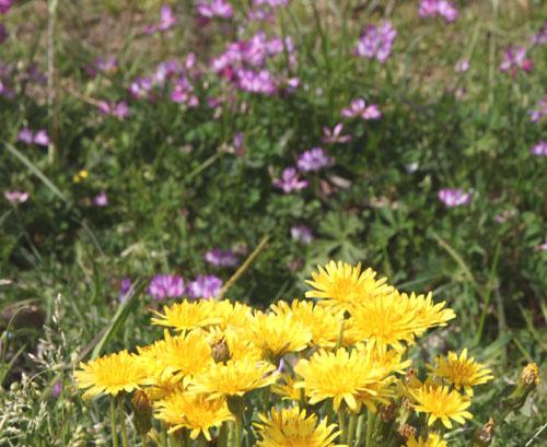 菜園は春の盛り1_e0048413_22545332.jpg