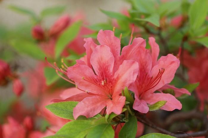 '13 庭の花だより_d0150720_7345792.jpg