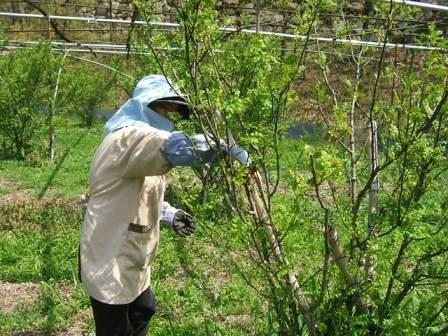 花山椒収穫、残り僅か_c0220321_1851334.jpg